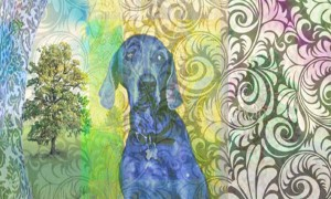 Poetic Dog Contemplating the Now by Janice Taylor, Weight Loss Coach, Author, Artist, Positarian